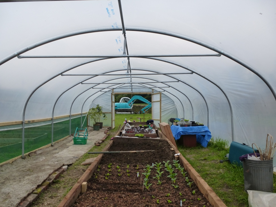 The raised bed in the polytunnel