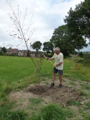 re-planting (1)